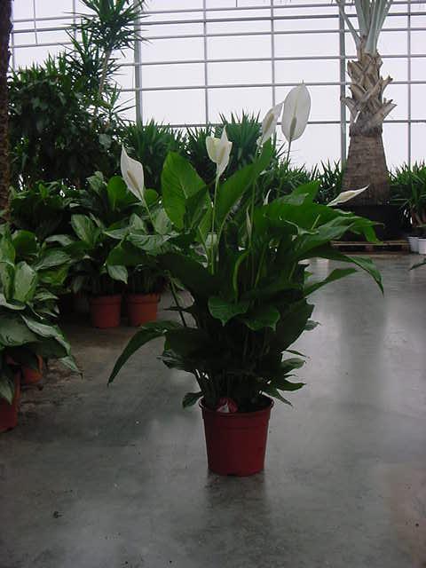 Cityg rtner in berlin hydrokultur raumbegr nung for Berlin pflanzen